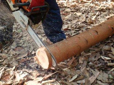 Densidade da madeira